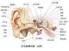 鼓膜正常为什么还会耳聋呢?